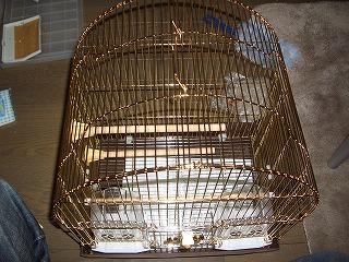 2006124cimg3379